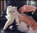 cat_bond