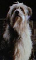 boyandhisdog