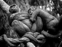 monkeycouple